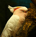 White and peach in nature (4960191501).jpg