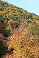 Wienerwald-Herbst 5443.JPG