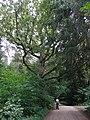 Wierśnianka - panoramio (98).jpg