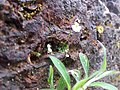 Wildflowerr.jpg