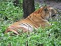 Wildlife Safari - 5.jpg
