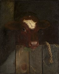 The Family Cow (Calf's Head)