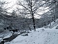 Winter wonderland - geograph.org.uk - 676586.jpg