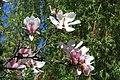 Wiosna - panoramio (6).jpg