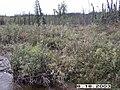 Wolf Survey, Denali, 2003 (62d8aac6-91e8-4cd1-826b-b87edbcbf9bd).jpg