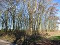 Wood, Westfield Farm - geograph.org.uk - 327889.jpg
