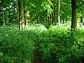 Woodland, Birkhill - geograph.org.uk - 21407.jpg