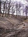 Woodland, Lownorth Park - geograph.org.uk - 395896.jpg