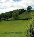 Woodland - geograph.org.uk - 1333963.jpg