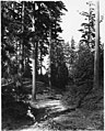 Woodland Park, Seattle, ca 1898 (MOHAI 6445).jpg