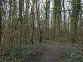 Woodland near Codnor - geograph.org.uk - 1805396.jpg