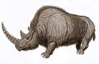 Woolly rhinoceros - Restoration of a woolly rhinoceros