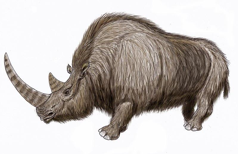 rinoceronte lanudo dibujo