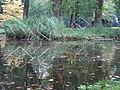 Zins Kleve Forstgarten 02.JPG