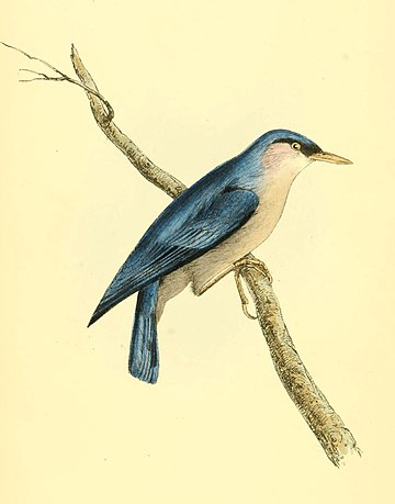 Zoological Illustrations Volume I Plate 2.jpg