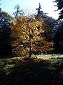 """""""Een boom in de herfst."""".jpg"""