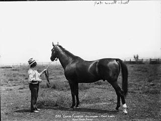 Grand Flaneur Australian-bred Thoroughbred racehorse