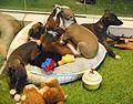 (1)Pet shop 005.jpg