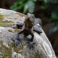 (1)water dragon-2.jpg