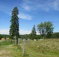 Åsa gravfält (RAÄ-nr Ytterselö 123-1) 0398.jpg