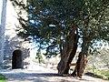 Église Saint-Pierre du Chefresne - If funéraire.JPG