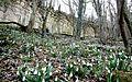 Весна на руїнах Мангуп-Кале.jpg