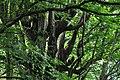 Грузия, ботанический сад - panoramio (3).jpg