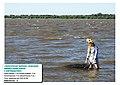 Загрязнение мирового океана нефтью и нефтепродуктами.jpg