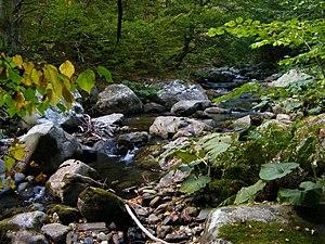Stara Reka Reserve - Image: Зелена прохлада