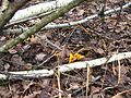 Ноябрьские лисички. - panoramio.jpg