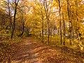 Осінь у лісі.jpg