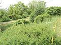 Парк шума Гази Баба во мај (81).JPG