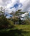 Пено. Орлинка. 2014 - panoramio (18).jpg