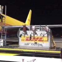 File:Перевозка лошадей самолетом, почтой DHL.ogv