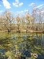 Пойменный водоем по правому берегу реки Яузы ниже Окружной ж.д. 02.jpg