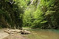 Река Хоста в Тисо-Самшитовой роще.jpg