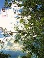 "Сады ""Кудьма"" - panoramio (8).jpg"