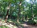 Украина, Киев - Голосеевский лес 03.jpg