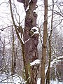 Чернечий Ліс21.jpg