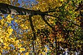 پاییزدر ایران-قاهان قم-Autumn in iran-qom 29.jpg