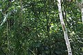 খাদিমনগর জাতীয় উদ্যান 04.jpg