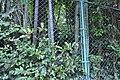 つりがね池公園 - panoramio (10).jpg