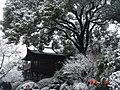 杭州.西湖雪景(背景:望湖楼) - panoramio.jpg