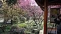 杭州 植物园 灵峰探梅(品梅苑) - panoramio (4).jpg