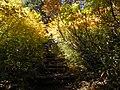 黄色の階段 - panoramio.jpg