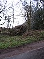 -2021-02-23 Stacked harvested timber, Northrepps, Norfolk.JPG