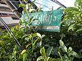 05123jfPedro Gil Marcelino Streets Buildings Iglesia Malate Manilafvf 12.jpg