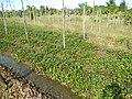 0581jfLandscapes Roads Vegetables Fields Binagbag Angat Bulacanfvf 09.JPG