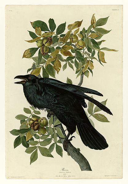 File:101 Raven.jpg