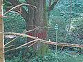 1218 Sommerlinde 3.8 m Um.JPG